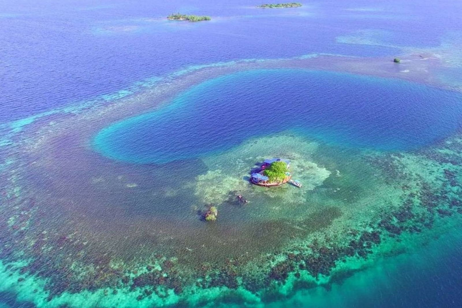 Cowork with corals / Central America / Belize